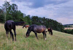 Pferde Familie Scheiber