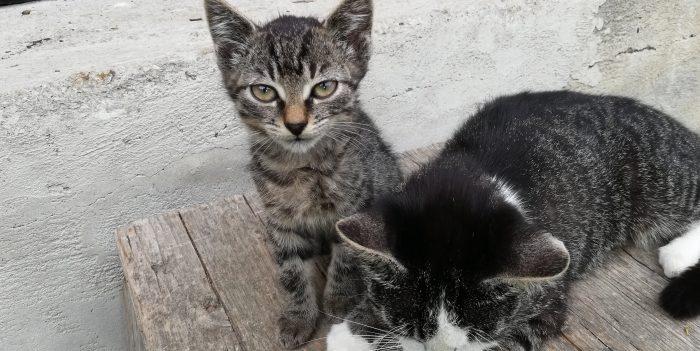 Katzen vom Hof DIE-PHARM